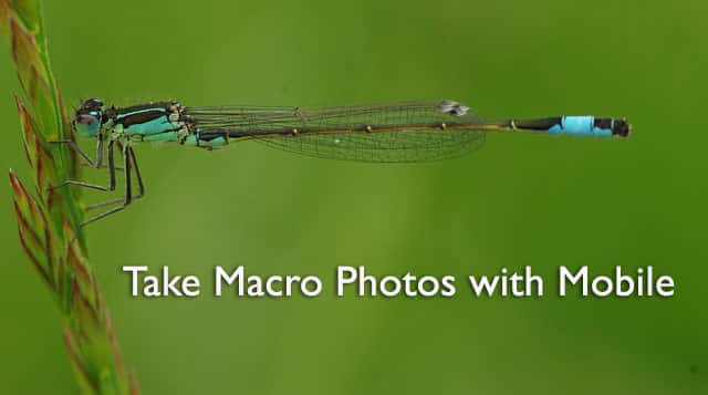 How to Take Macro Photos with Mobile Phone